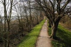 Trädet fodrade gångbanan parkerar in Royaltyfria Bilder