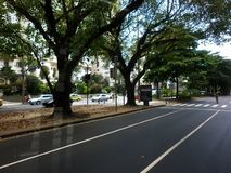 Trädet fodrade gator royaltyfri fotografi
