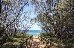 Trädet fodrade slingan ner till stranden och det mycket blåa vattnet nära Mooloolaba i Queensland Australien royaltyfria bilder