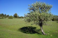 Trädet gjuter en skugga Arkivbild