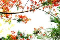 Trädet har ljus himmel Arkivbild