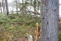 Trädet har stupat royaltyfri foto
