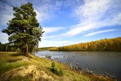 Trädet i ängen på en solig dag floden flödar Royaltyfri Fotografi