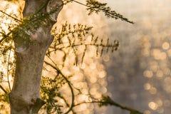 Trädet i ankomsten av Santa Claus festar Royaltyfri Fotografi