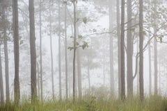 Trädet i dimman Royaltyfria Bilder