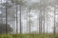 Trädet i dimman Arkivbild