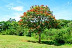 Trädet i en gräsplan parkerar Arkivbild