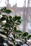 Trädet i förväntan av våren Arkivfoto