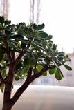 Trädet i förväntan av våren Royaltyfri Fotografi