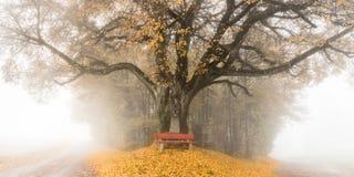 Trädet i hösten med parkerar bänken arkivfoto