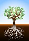Trädet i jord och det är rotar Arkivbild