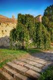 Trädet i Kalemegdanen parkerar Royaltyfri Foto