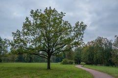 Trädet i Pavlovsk parkerar Arkivfoton