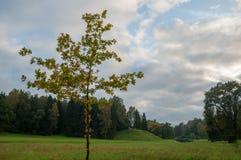 Trädet i Pavlovsk parkerar royaltyfria bilder