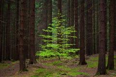 Trädet i skogen arkivbilder