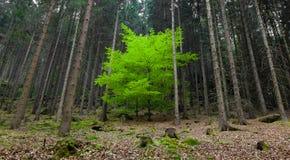 Trädet i skogen royaltyfria foton