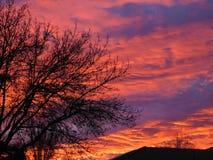Trädet in i soluppgången fotografering för bildbyråer