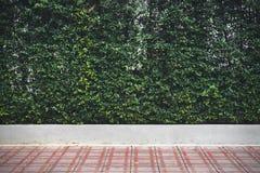 Trädet i storstaden parkerar modeller på en gångbana för tegelplattagolv fotografering för bildbyråer