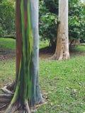 Trädet i trädgård Royaltyfria Foton