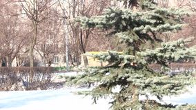 Trädet i vår parkerar arkivfilmer