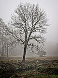 Trädet i vintermorgondimma med Hark längs en liten vik arkivfoto