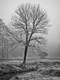 Trädet i vintermorgondimma med Hark längs en liten vik i B&W arkivfoto