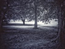 Trädet kan tala Royaltyfria Bilder