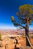 Trädet klamra sig fast intill klippan i Canyonlands Utah Arkivbilder