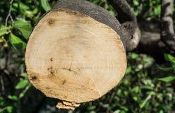Trädet klipptes Arkivbild