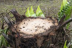 Trädet klipptes i skogen royaltyfria foton