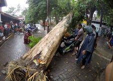 Trädet kollapsade Royaltyfri Bild