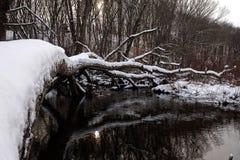 Trädet lägger ner på floden Arkivbild