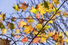 Trädet lämnar Flora Colors Royaltyfri Foto