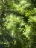 Trädet lämnar suddigt vid vind Arkivbilder