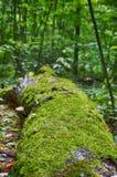 Trädet ligger på jordningen Arkivfoton