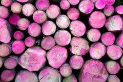 Trädet loggar rosa färger Arkivfoton