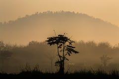 Trädet med en singel Royaltyfri Fotografi