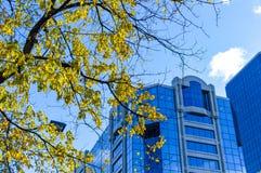 Trädet med gulingsidor och de högväxta affärsskyskraporna Arkivbild