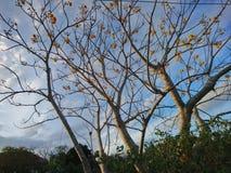 Trädet med himmel i morgonen fotografering för bildbyråer