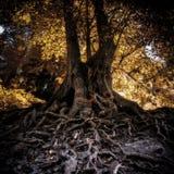 Trädet med länge rotar royaltyfria bilder