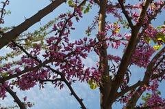 Trädet med lilor blommar parkerar in Arkivbild