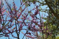 Trädet med lilor blommar parkerar in Royaltyfri Fotografi