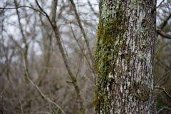 trädet med mossa rotar på i en grön skog eller mossa på trädstammen Trädskäll med grön mossa Azerbajdzjan natur royaltyfria foton