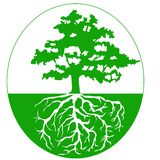 Trädet med rotar bakgrundsekologi  Arkivbilder