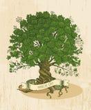 Trädet med rotar på grov bakgrund Arkivbilder