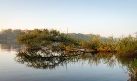 Trädet med sidor har stupat in i en sjö royaltyfria bilder