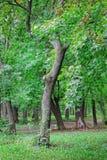 Trädet med skället i höst parkerar royaltyfria foton