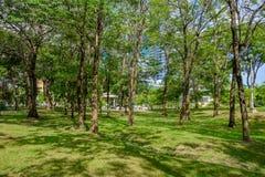 Trädet med skugga parkerar offentligt Fotografering för Bildbyråer