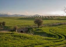 Trädet och den gamla bron med Troodos berg i bakgrunden landskap platsen Peristerona, Cypern Arkivbild