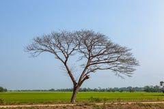 Trädet och gräs är döda på fältet Arkivfoto